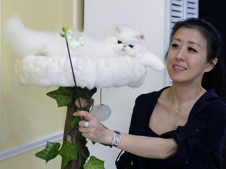 Taiwanese cat breeder Chang Chin-yi