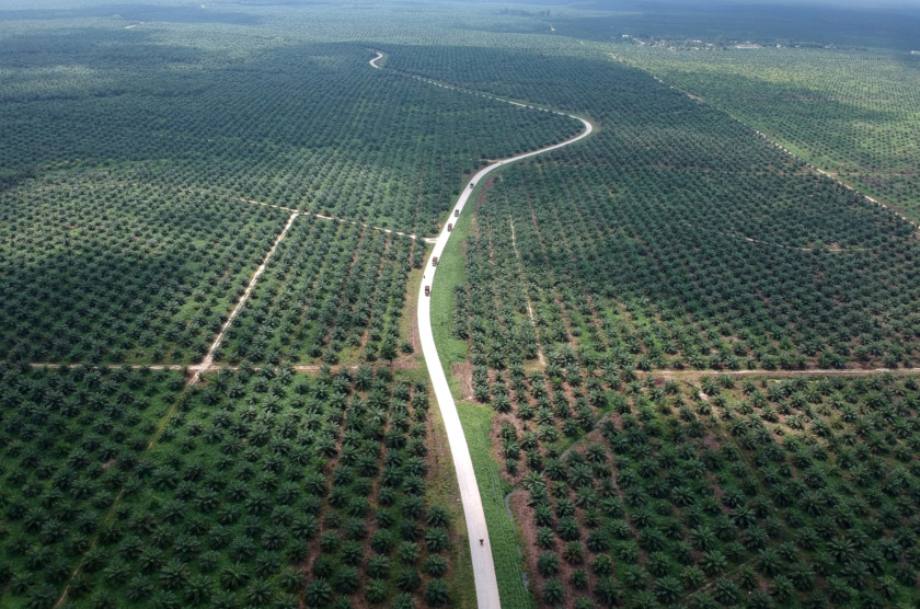 Copy-of-2019-01-31T083311Z_1785945643_RC132284BAB0_RTRMADP_3_INDONESIA-EU-PALMOIL-1550662769098