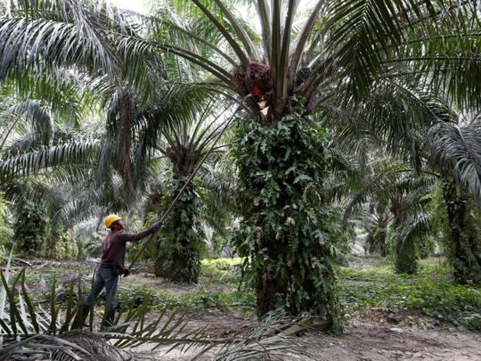 Copy-of-2019-02-11T060135Z_34725222_RC18A36AD020_RTRMADP_3_PALMOIL-TECHNOLOGY-1550662773308