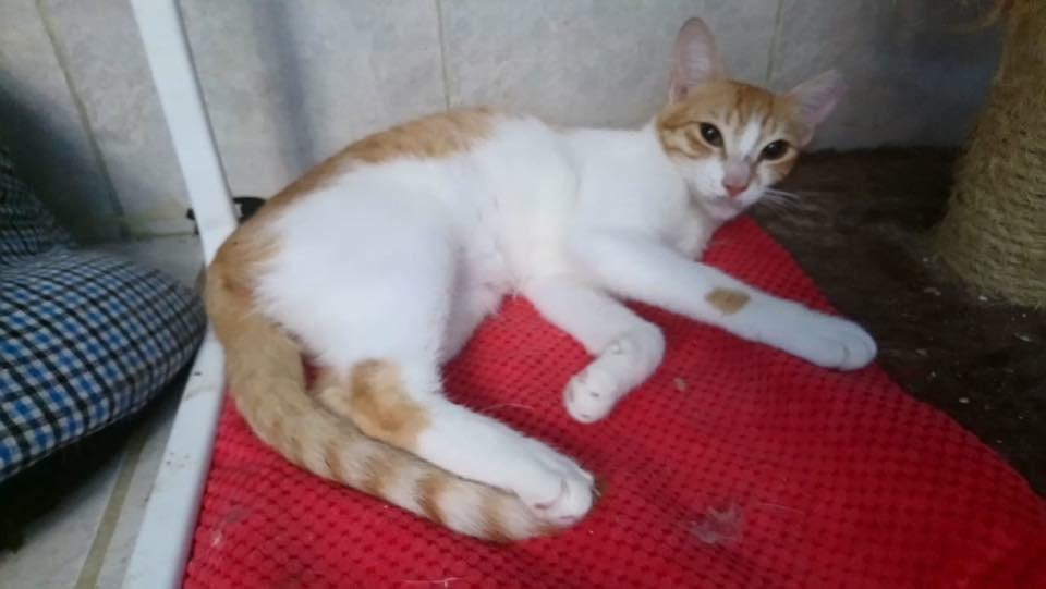 RDS_190218-Save-an-animal---Ella-1550649785099