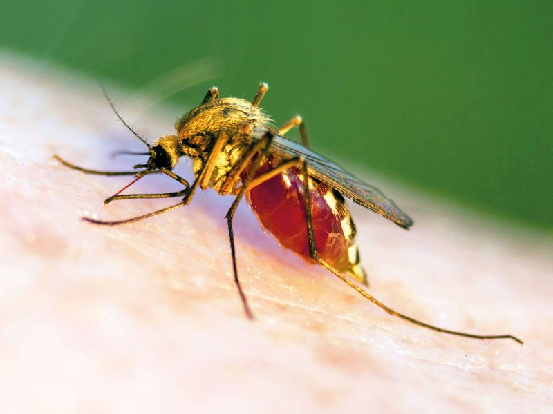 South African scientists discover new chemicals that kill malaria parasite
