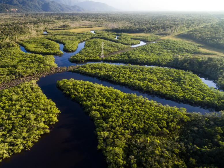 tab-The-Amazon-jungles-iStock-697292990-1550668236119