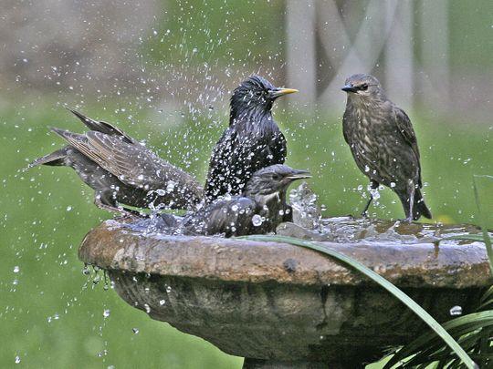 The joy of birds in my backyard