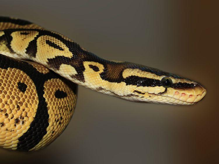 python, generic