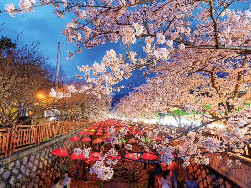 tab-Jinhae,-Changwon,-South-Korea--iStock-946205352-(Read-Only)