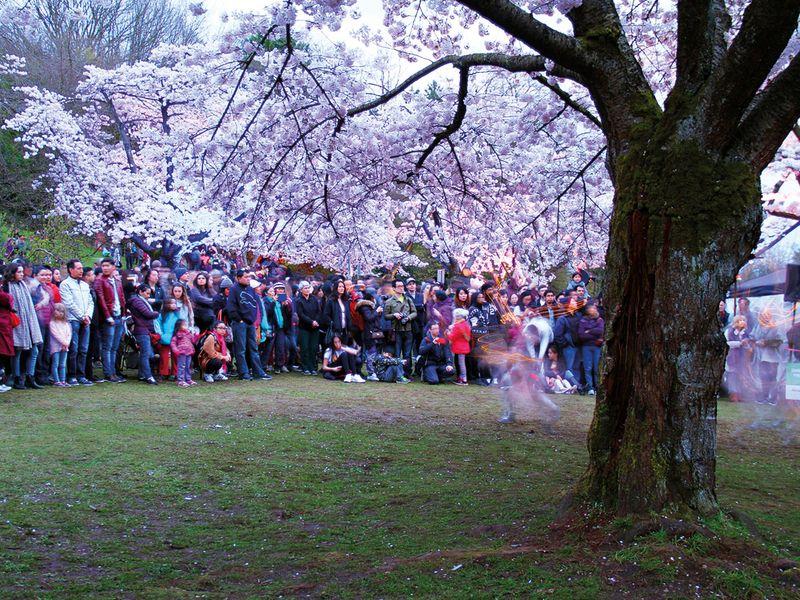 tab-Vancouver's-Queen-Elizabeth-Park-iStock-683754102-(Read-Only)