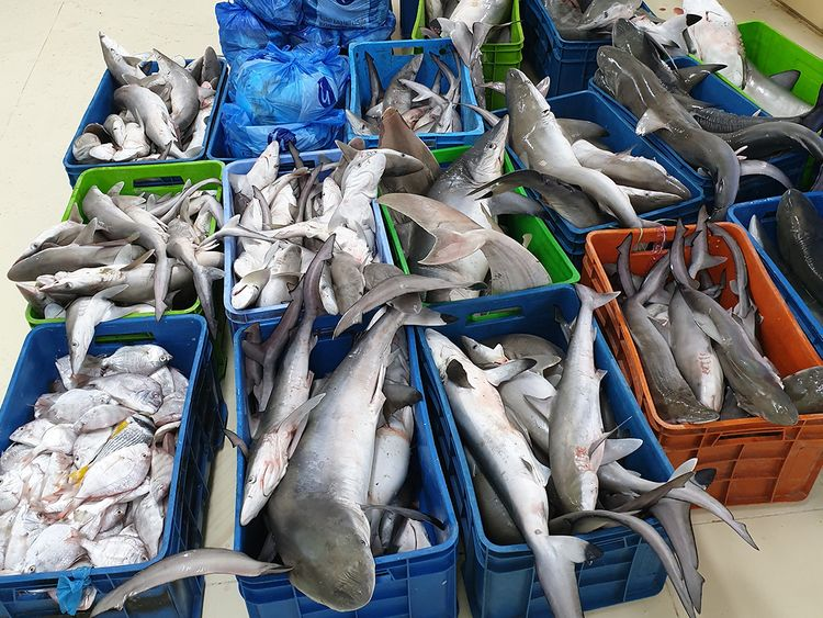 Officials seize 1.7 tonnes of fish, donate haul to charity