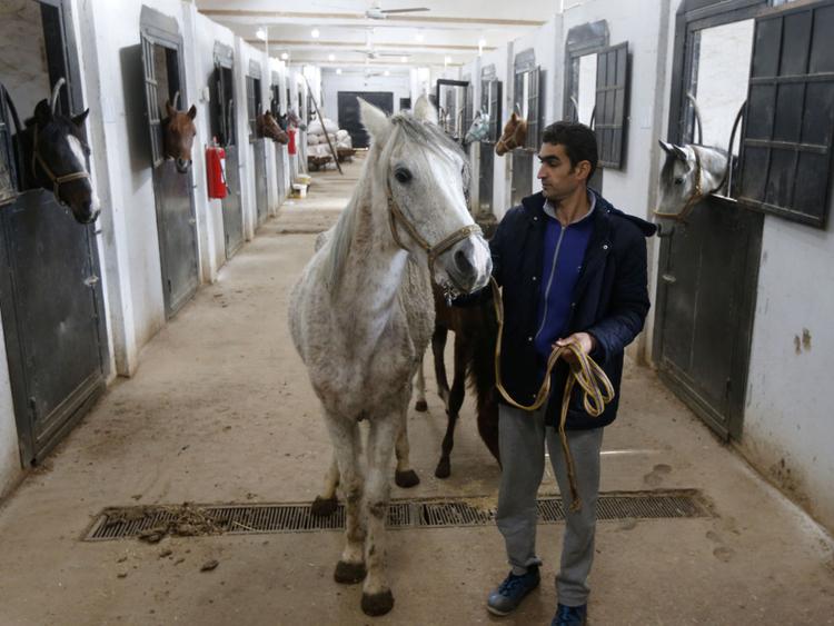 War-horses-1551600501306