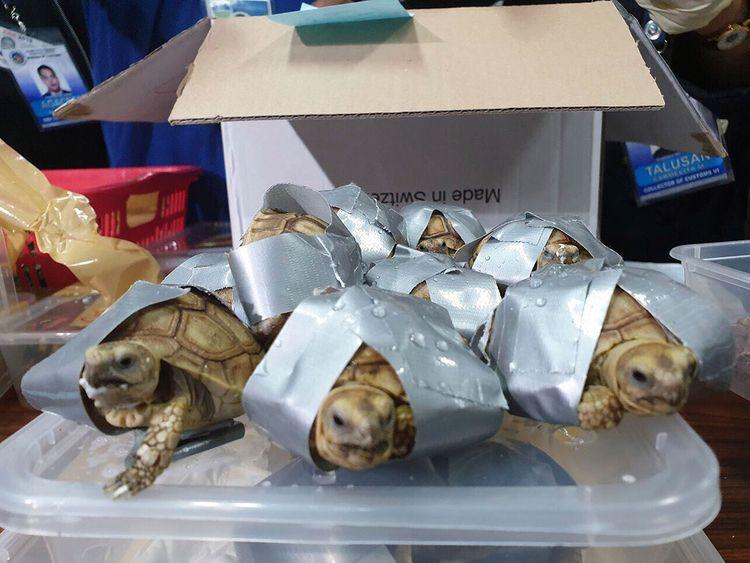 Philippines_Turtles_83196