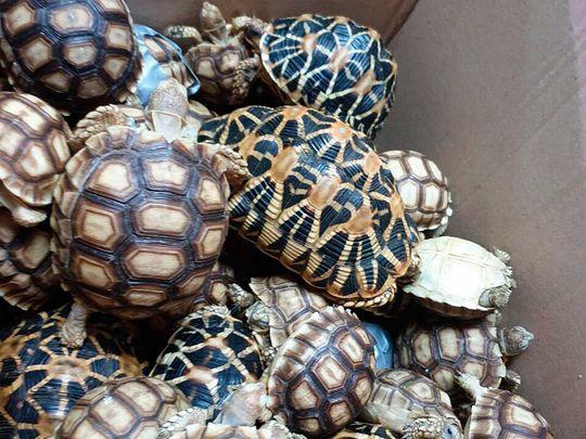 Turtles 091