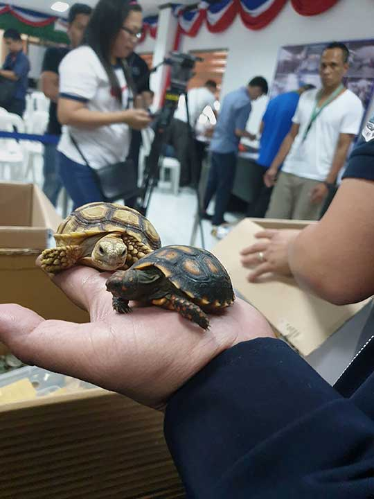 turtles confiscated 310