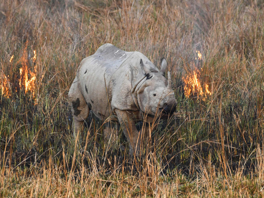 Navigating the Rhinoland