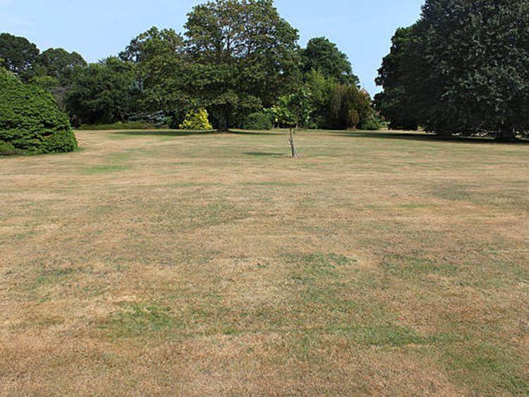 190316 brown lawn