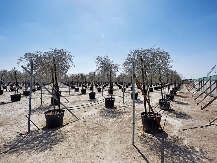 Dubai's model of sustainability sprouting at the Expo nursery