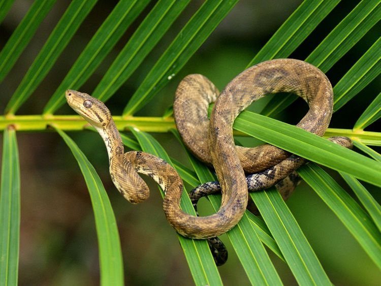 190322 python