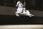 TAB-190325-WWW-RENOWNED-SPANISH-RIDING-SCHOOL-SET-TO-CAPTIVATE-ABU-DHABI-AUDIENCE-WITH-ITS-MIDDLE-EAST-DEBUT-(2)-1553435642123