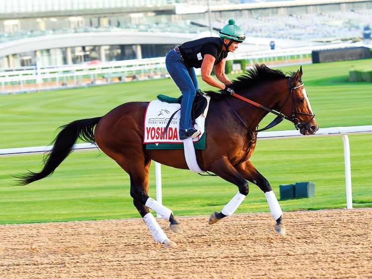 Meydan leaves no stone unturned for big day | Horse-racing