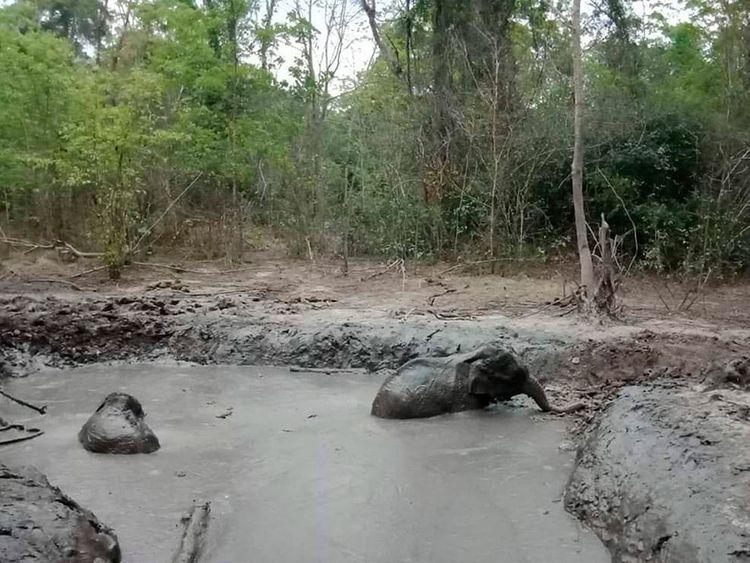 Thailand_Elephant_Rescue_42693