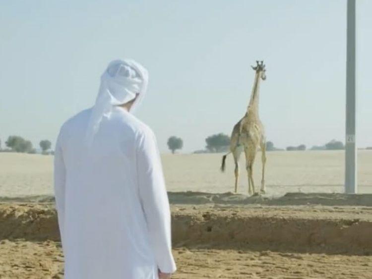 RDS_190403-Shaikh-Hamdan-giraffe-1-1554280156315