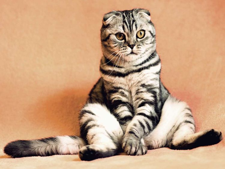 cat 2934720_1920 cats generic