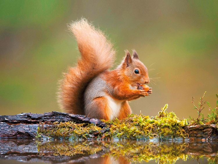 The battle for Britain's squirrels | Europe – Gulf News