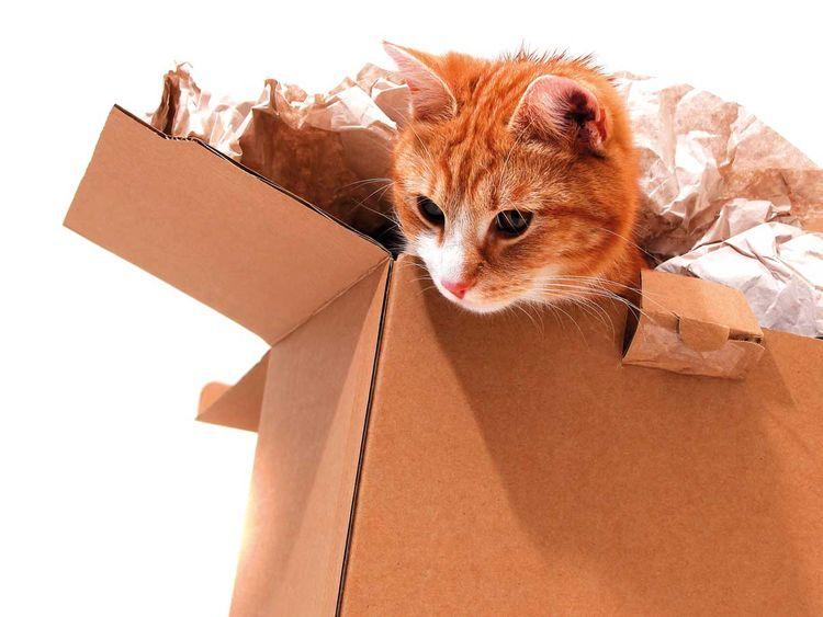 Su_190430_Packing_Pets_shutterstock_90513970