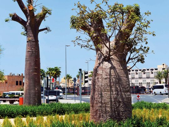 NAT-190417-NEW-TREE911-(Read-Only)