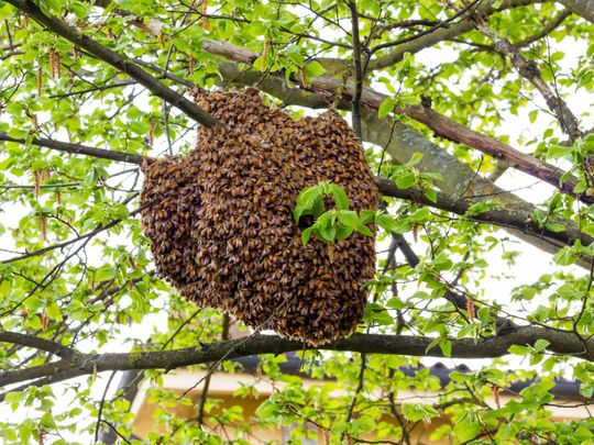 OPN A bee hive-1557663023324