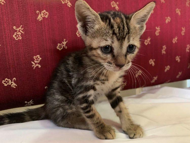 RDS_190513 Save an animal - Kitten-1557668842193