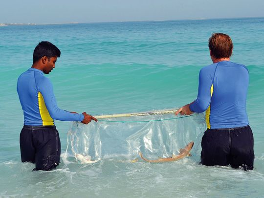 15 baby sharks, two stingrays released into sea