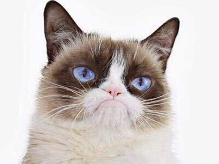 RDS_190517 Grumpy Cat 1-1558097593492