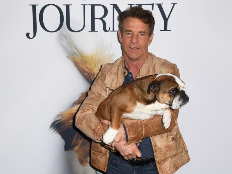 A Dog's Journey Dennis-1558433912118