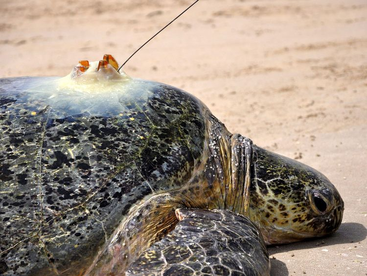 NAT-190522-Turtle-Tagging-344-(Read-Only)