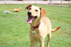 RDS_190527 Save an animal - Natalya-1558881446035