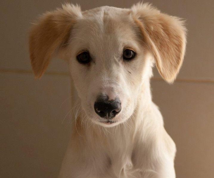 RDS_190527 Save an animal - Rudolf-1558881444219