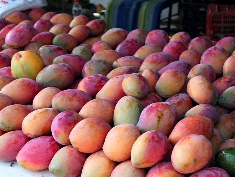 Happiness is eating mangoes