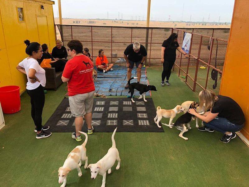 Stray Dogs Centre in Umm Al Quwain