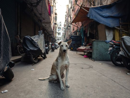 Street dogs in India-1559301897906