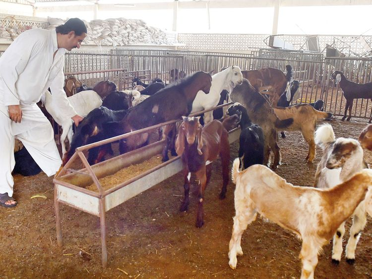 Meat prices go up ahead of Eid | Uae – Gulf News