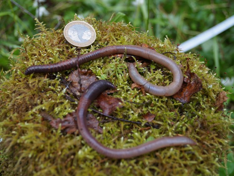 SCI EARTHWORMS CLIMATE-0-1559548356430