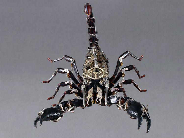 190608 Scorpion sextus