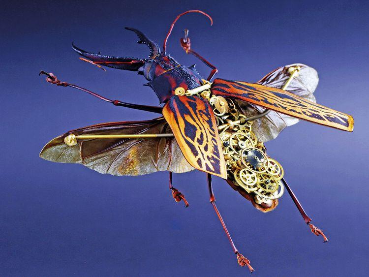 Macrodontia tertius