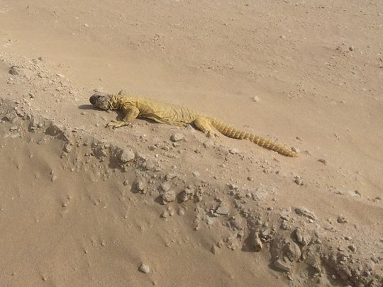 NAT_190612 EXPO Reptile Rescue1-1560674322024
