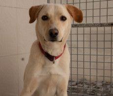 RDS_190617 save an animal - wally-1560694777229