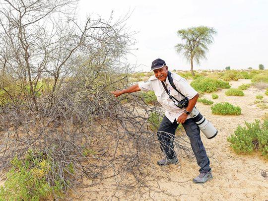 Dubai's birdman takes a bow after 30 years in Dubai Municipality