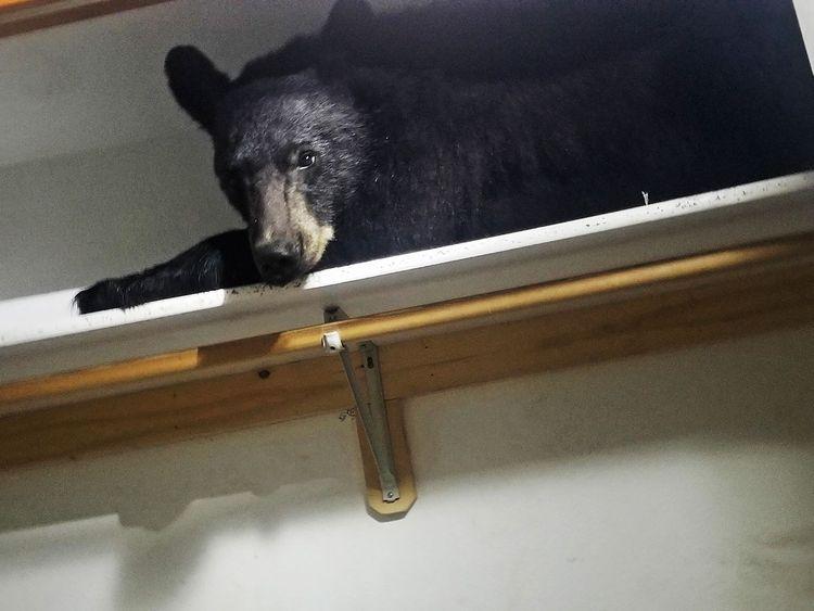 Sleeping_Bear_65699