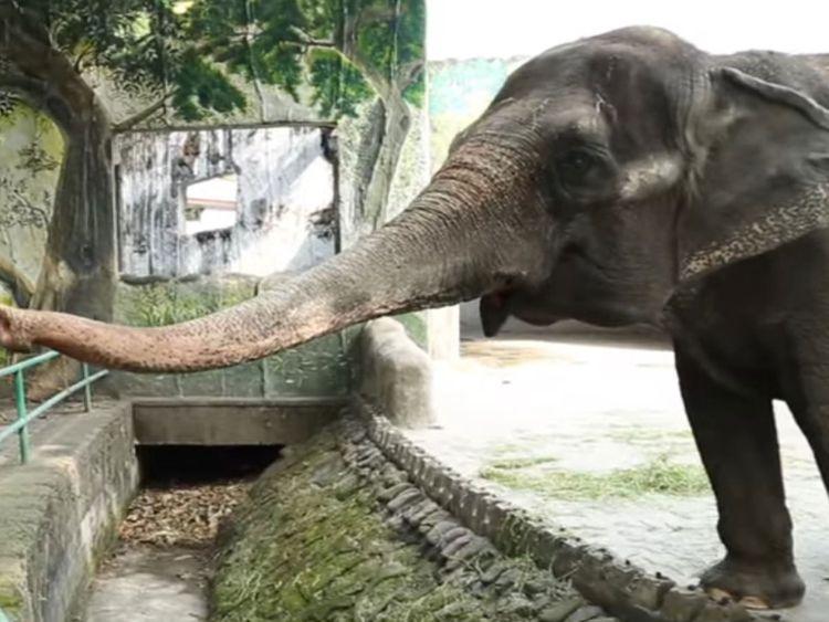 Mali the elephant