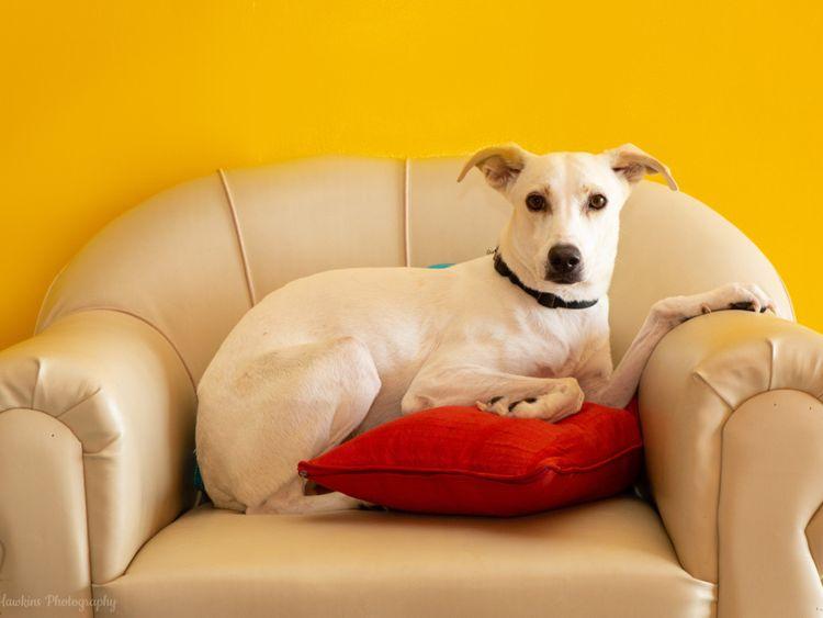 RDS_190701 Save an animal - Frankie-1561902645671