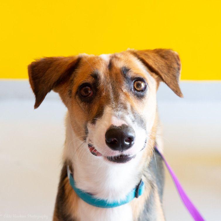 RDS_190701 Save an animal Caramel-1561902648705