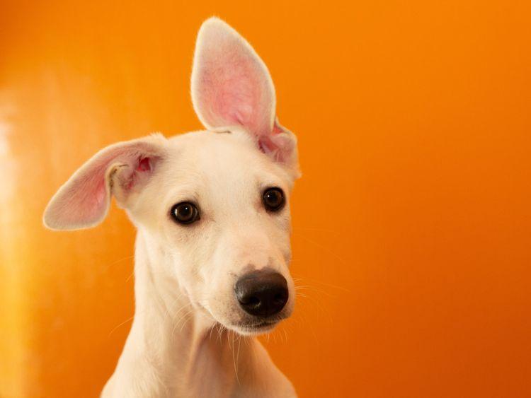 RDS_190701 Save an animal Vanilla-1561902651968